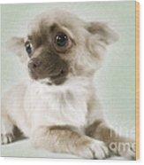 Chihuahua Dog Wood Print