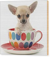 Chihuahua In Cup Dp684 Wood Print by Greg Cuddiford
