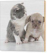 Chihuahua Puppy And British Shorthair Wood Print