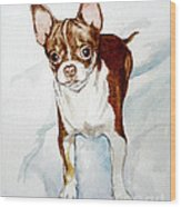 Chihuahua White Chocolate Color. Wood Print