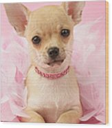 Chihuahua With Feather Boa Wood Print by Greg Cuddiford