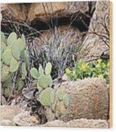 Chihuahuan  Desert Cacti Wood Print