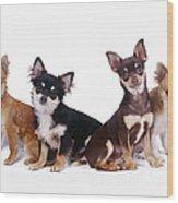 Chihuahuas Dogs Wood Print