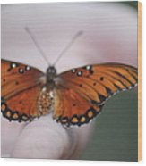 Child And Butterfly - We Shall Renew Again Wood Print