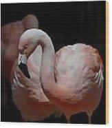 Chilean Flamingos Wood Print