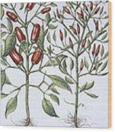 Chilli Pepper Plants Wood Print
