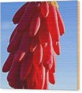 Chilli Ristra Balloon Wood Print