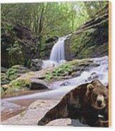 Chillin Bear Wood Print by Bob Jackson