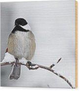 Chim Chim Chickadee Wood Print