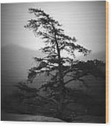 Chimney Rock Lone Tree In Black And White Wood Print
