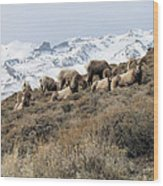 Chimney Rock Rams Wood Print