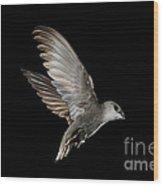 Chimney Swift Wood Print