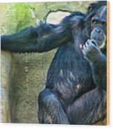 Chimp 1 Wood Print