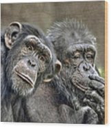 Chimp Couple Wood Print