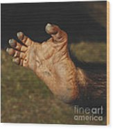 Chimpanzee Foot Wood Print