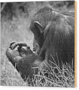 Chimpanzee In Thought Wood Print