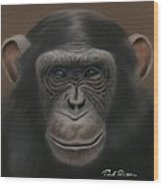 Chimpanzee Wood Print
