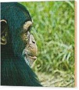 Chimpanzee Profile Wood Print