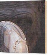 Chimpanzees Wood Print