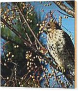 China Berry Hawk Wood Print