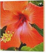 China Camp Hibiscus Wood Print