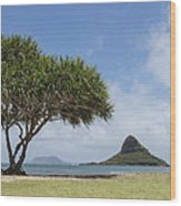 Chinamans Hat With Tree - Oahu Hawaii Wood Print