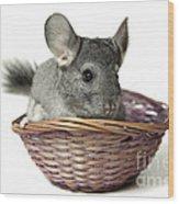 Chinchilla In A Straw Basket  Wood Print