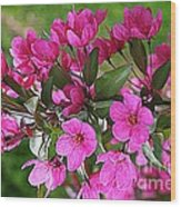 Chinese Apple Blossoms Wood Print