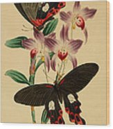 Chinese Butterflies Wood Print by Philip Ralley