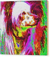 Chinese Crested Dog 20130125v2 Wood Print