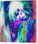 Chinese Crested Dog 20130125v3 Wood Print