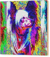 Chinese Crested Dog Three 20130125 Wood Print by Wingsdomain Art and Photography