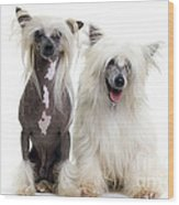 Chinese Crested Dogs Wood Print