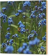 Chinese Forget Me Nots And Honey Bee Wood Print