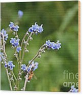 Chinese Forget Me Nots Wood Print