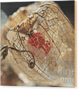 Chinese Lantern Plant - H Wood Print