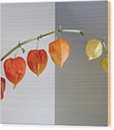 Chinese Lantern Stem Wood Print