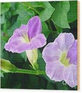 Chinese Violet  1 Wood Print