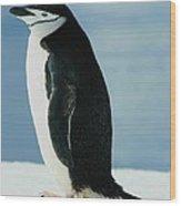 Chinstrap Penguin Wood Print