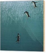 Chinstrap Penguins Leaping Wood Print