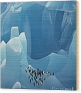 Chinstrap Penguins On Blue Iceberg Wood Print
