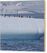 Chinstrap Penguins On Iceberg Wood Print