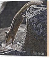 Chipmunk   #2155 Wood Print