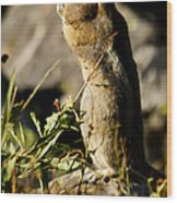 Chipmunk   #9594 Wood Print