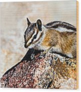 Chipmunk Wood Print