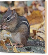 Chipmunk Hungry Wood Print