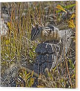 Chipmunk In Yellowstone Wood Print