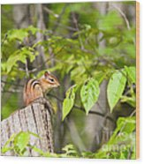 Chipmunk Shares Fence Post Wood Print