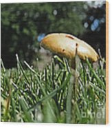 Chipmunks View Of A Mushroom Wood Print