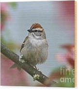 Chipping Sparrow In Blossoms Wood Print by Deborah Benoit